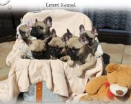 Esmari Puppies Born 15 April 2017